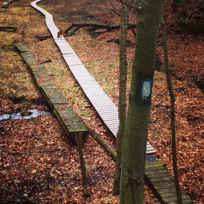 Elgin Trail